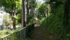 Villa-del-prefetto-sentiero-alberi